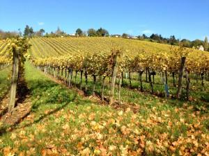 Paysage vignes Beaune